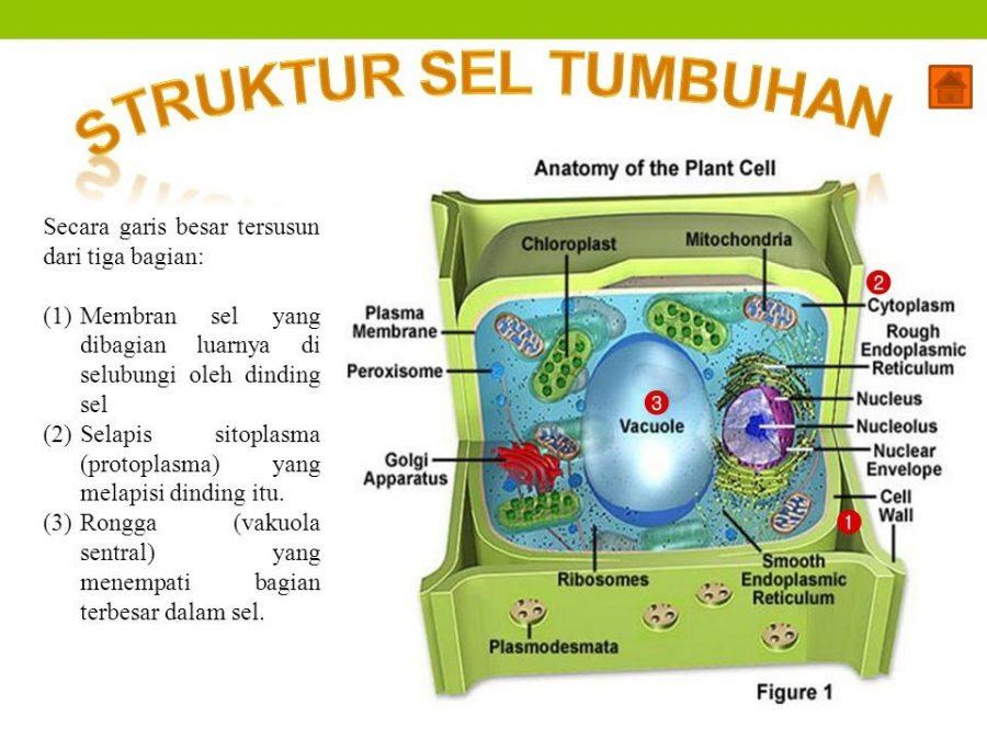 pengertian sel tumbuhan