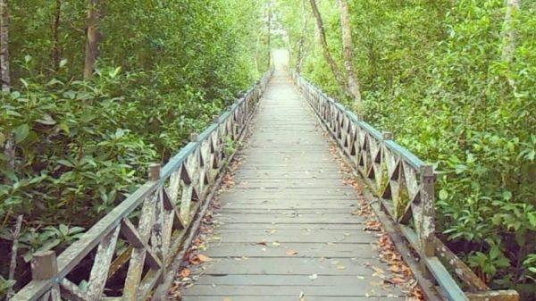 1 - tempat wisata balikpapan - hutan bakau margomulyo